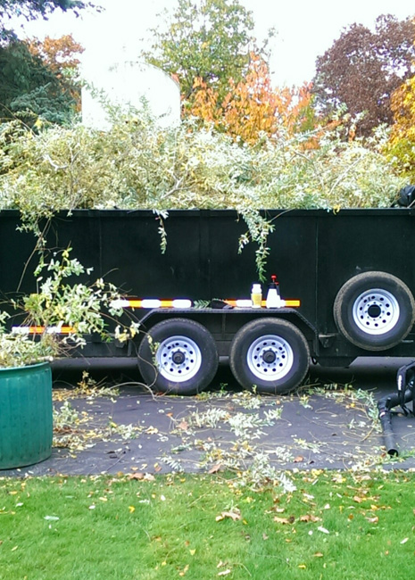 tree & shrub trimming lockport